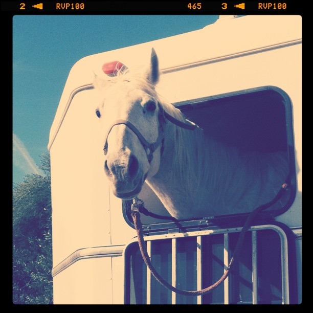 The horse that stared into my soul