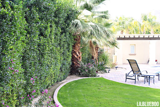 Concrete Curbing for landscape and ficus hedge