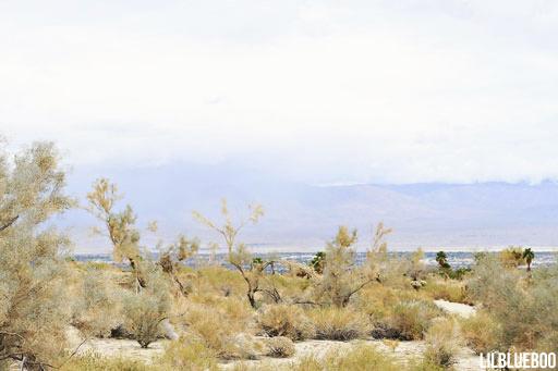 Wildflower Festival Palm Desert - View of the Desert