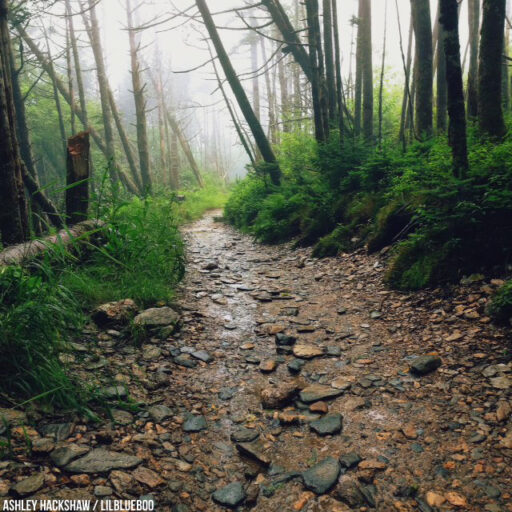 Hiking to Mt LeConte and Mount Le Conte Lodge