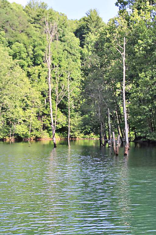 Hazel Creek - Town of Proctor