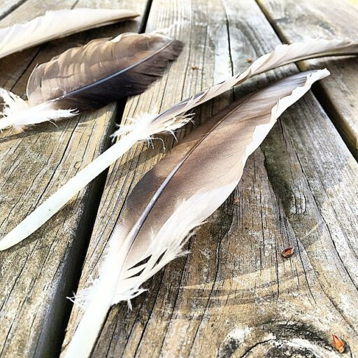 vulturefeathers