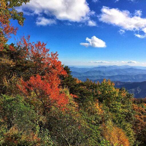 Smoky mountain fall leaf color