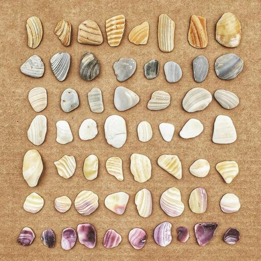 seashells sorted by color