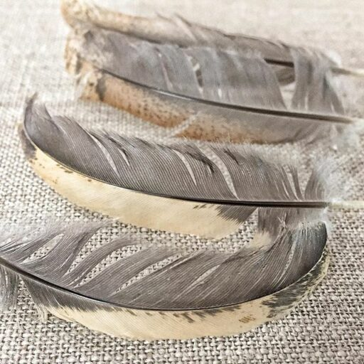 Buff Brahma feathers - buff and gray