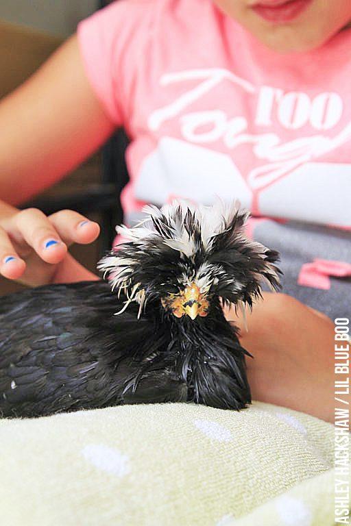 chicken Bath