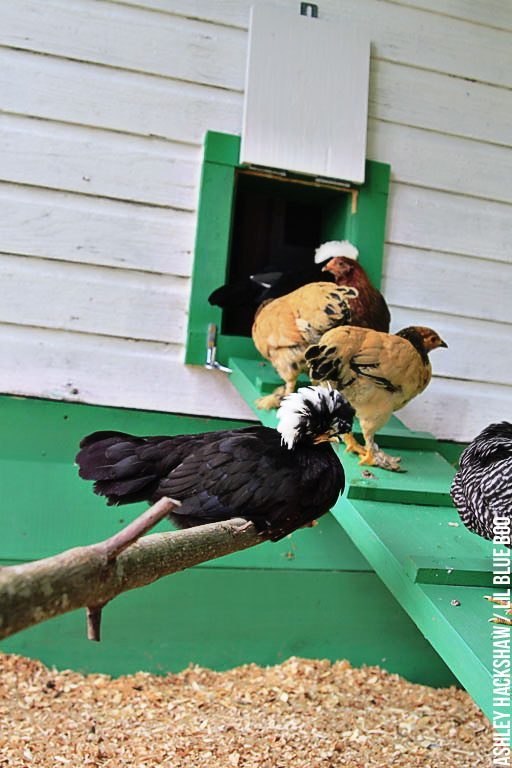 how to build a easy clean chicken coop