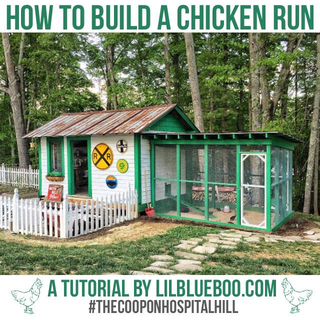 How To Build A Chicken Run Ashley Hackshaw Lil Blue Boo