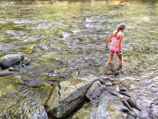 Deep Creek in the Great Smoky Mountains National Park