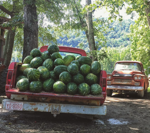 Dog Days of summer - watermelon from Darnell Farms