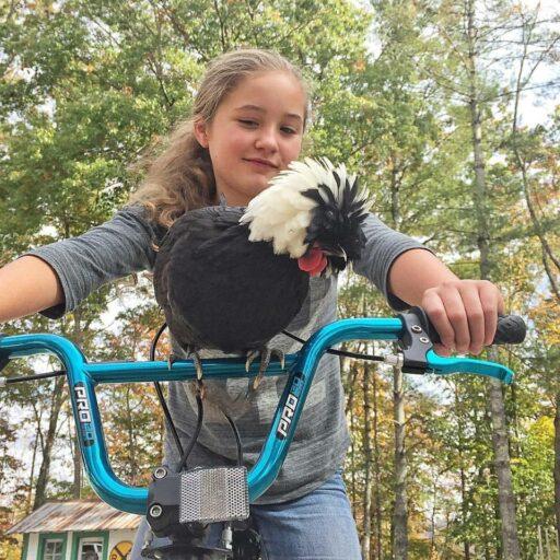 chicken riding a bike