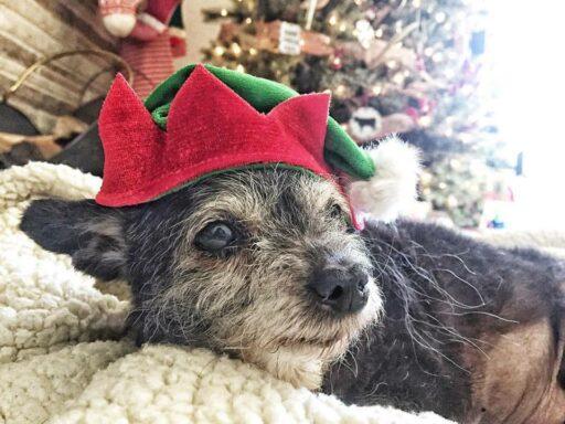 Happy the Happiest Dog Health Updates - Senior Dog Adoption Story