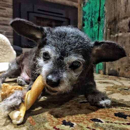 Happy the Happiest Dog - Senior Dog Adoption and Rescue