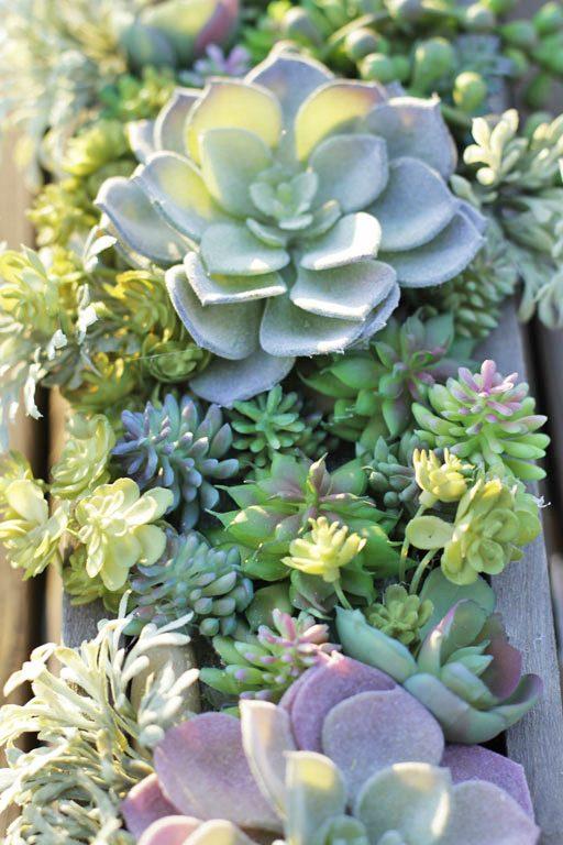 How to make a succulent arrangement